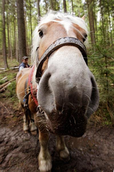 Das-Pferd-Hans